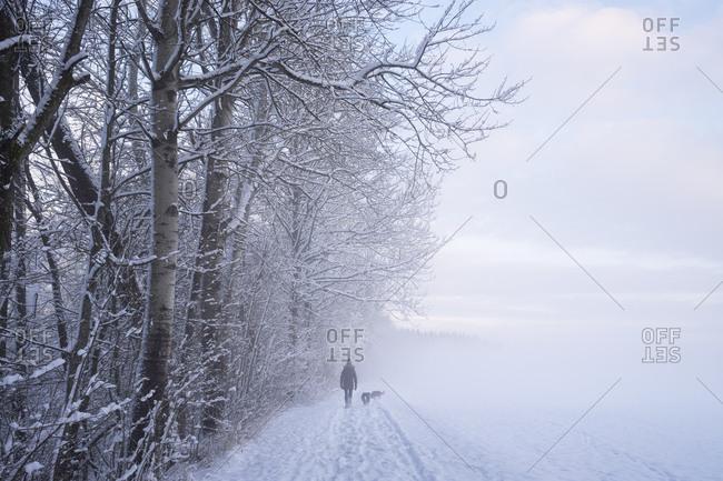 Walker with two dogs in winter landscape