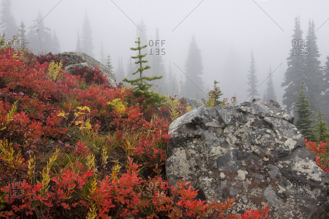 Autumn fog in Mount Rainier National Park, Washington