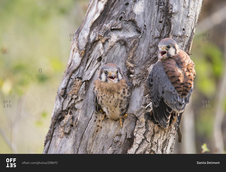 Pájaros de la jerarquía de la cavidad - plantas nativas de Kansas