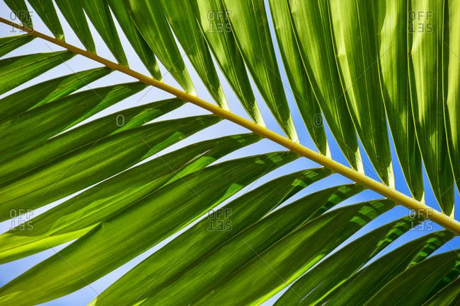 Palm leaf in sunlight - Offset