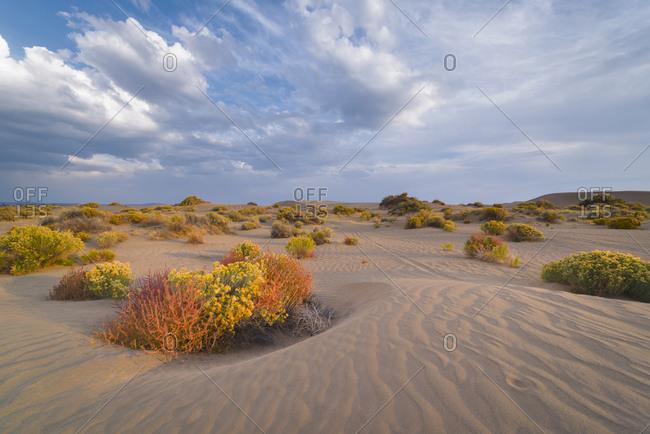 Desert landscape with shrubs - Offset