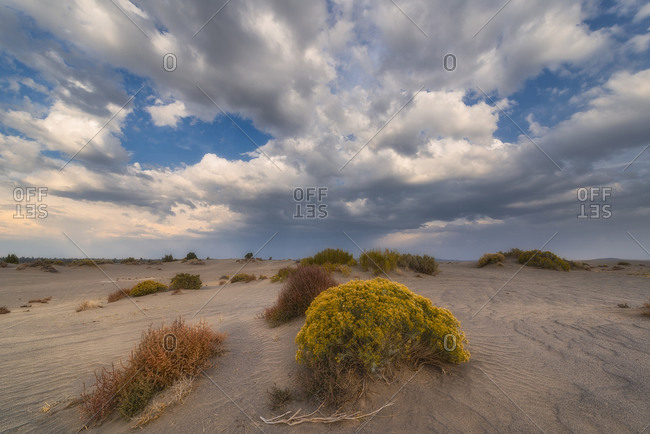 Shrubs in desert landscape - Offset