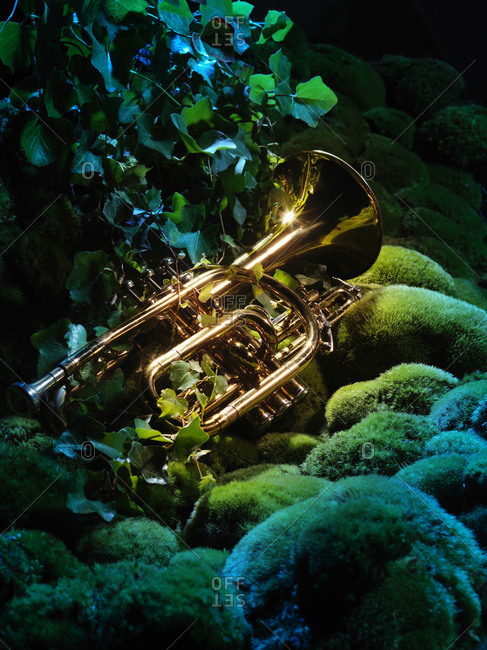 Trumpet lying on mossy rocks and ivy