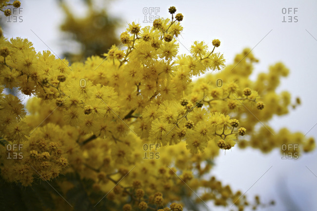 Close up of blooming yellow flowers