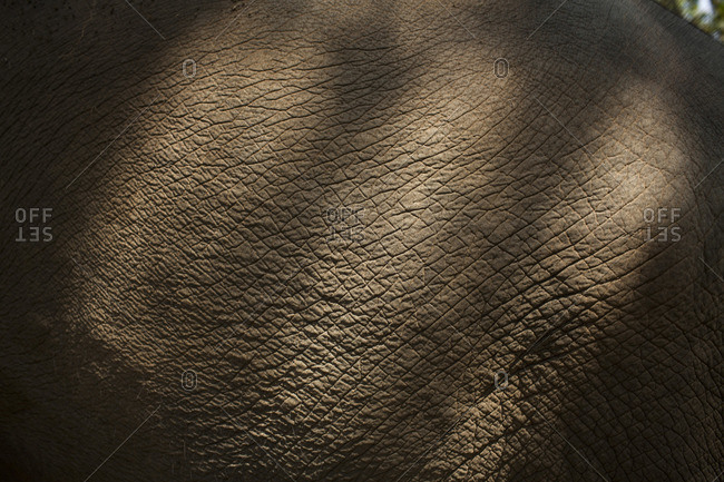 Close up the skin of an elephant
