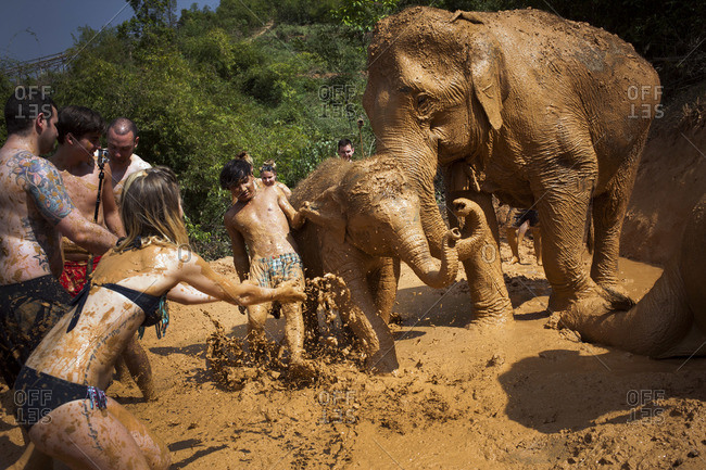 February 12, 2015: Tourists playing in the mud with elephants