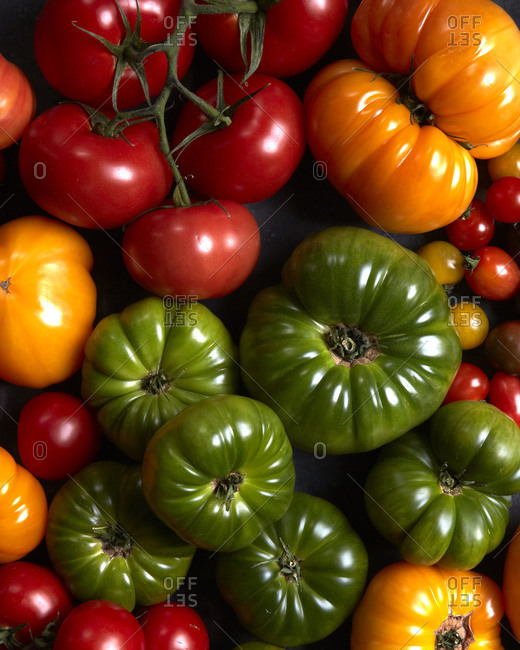 A colorful mix of tomato varieties