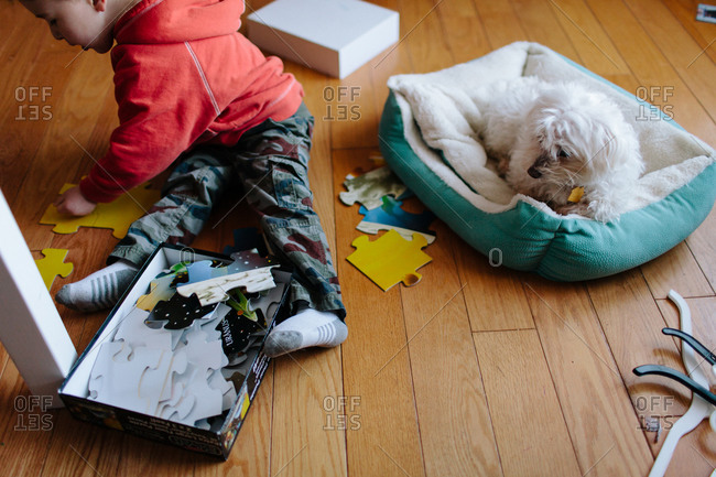Boy putting puzzle together while dog watches