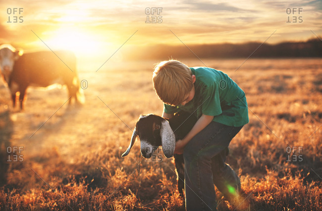 Boy hugging a goat in a field at sunset