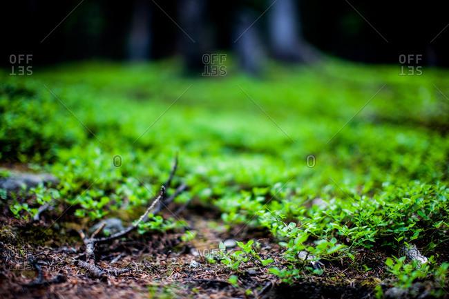 Verdant forest floor in summer