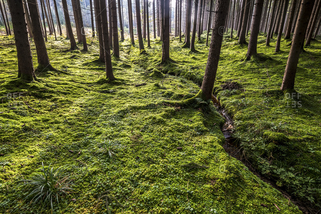 Trees casting shadows inside forest near Rott, Germany