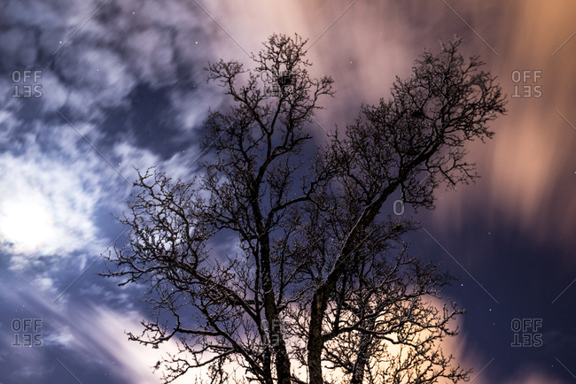 Nighttime clouds over snow covered tree in Tromso, Norway
