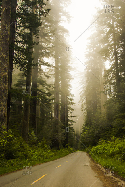 Road vanishing into forest,  Redwood National Park, California