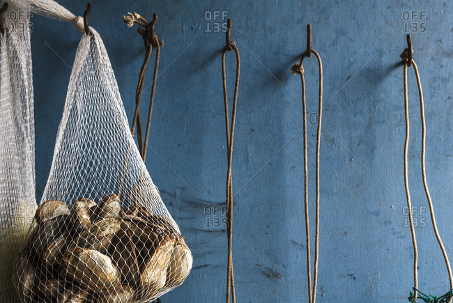 Soft-shell clams in cooking net hanging on wall