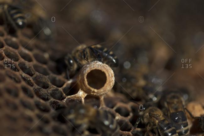 Nurse bees take care of a queen bee egg