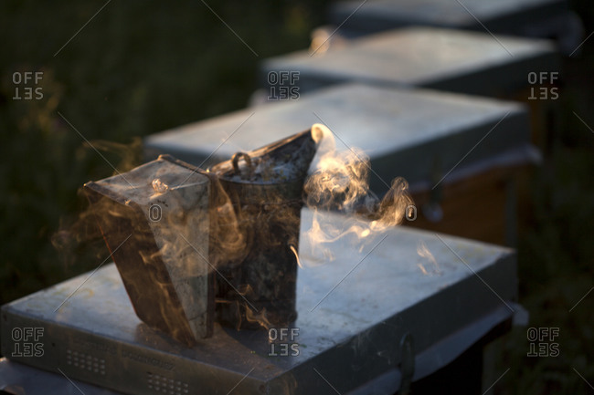 A bee smoker on top of a beehive in the apiary of Puremiel beekeepers