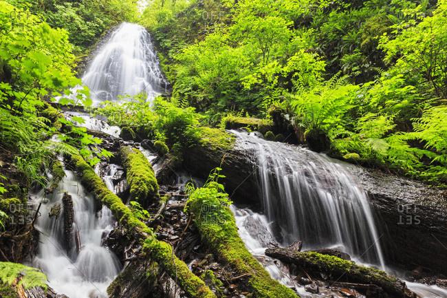 Fairy Falls, Columbia River Gorge, Multnomah County, Oregon