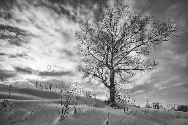 Lone tree in Japanese rural landscape