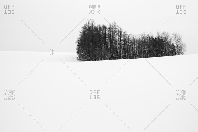 Copse of rural trees in Japanese winter