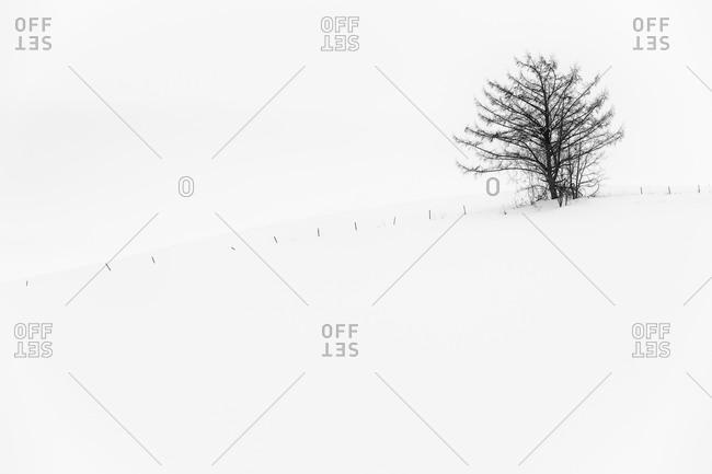 Lone tree in winter Japanese landscape