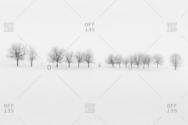 Line of trees in snowy field in Japan