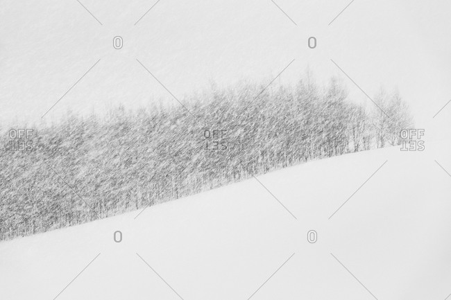 Copse of trees in rural Japanese blizzard