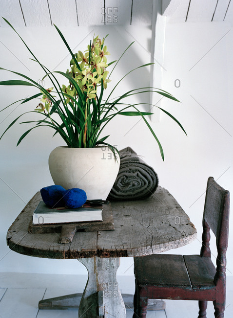 Still life of a potted flower on a tabletop