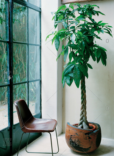 Interior of a room with an indoor plant next to a chair