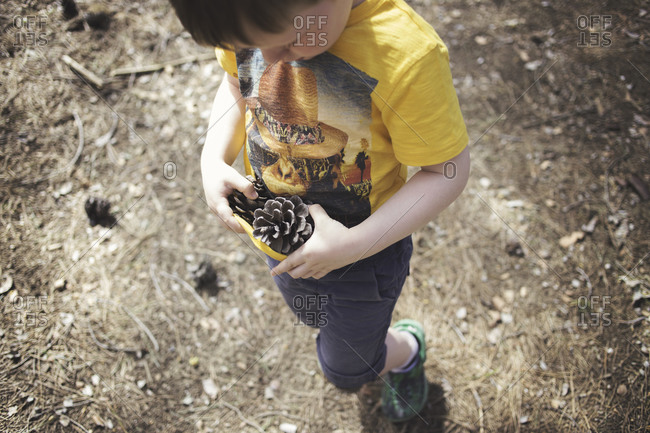 High angle view of young boy collecting pinecones
