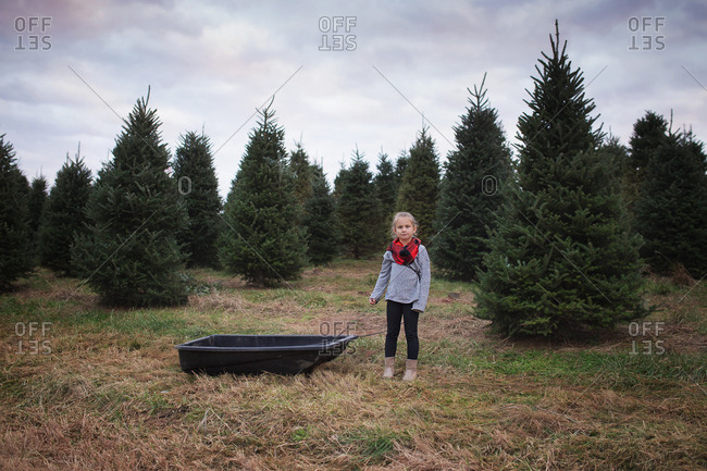 Young girl standing on a tree farm