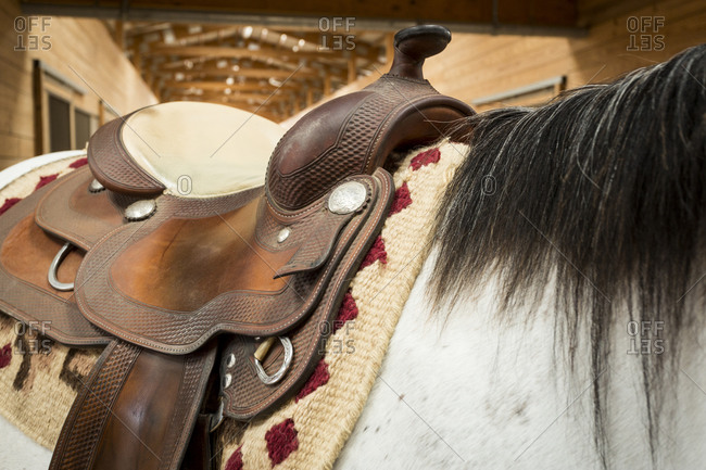 Close up of a saddled-up horse in a barn