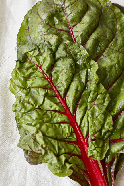 Close up of red chard leaves