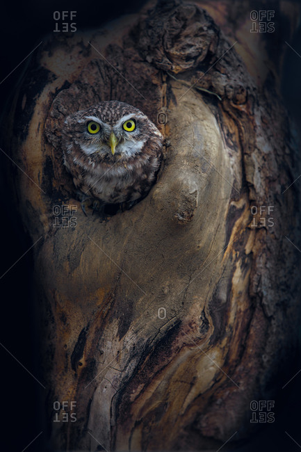 Owl perched in hole in tree