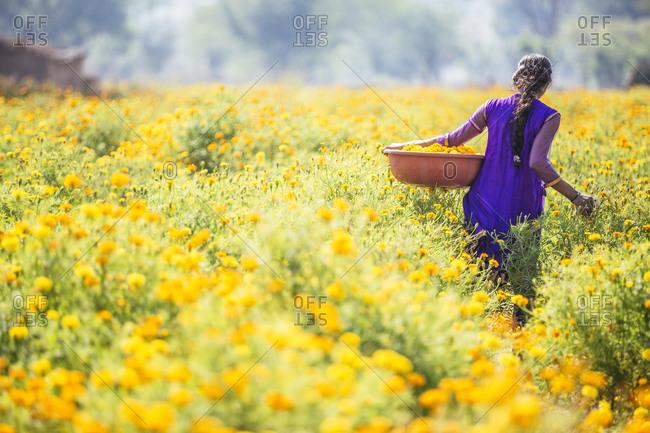 Indian woman carrying basket in flower field