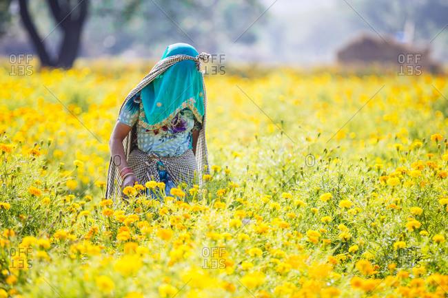 Woman in veil in Indian flower garden