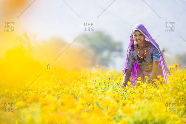 Pushkar, India - February 2, 2015: Woman in sari in rural flower garden