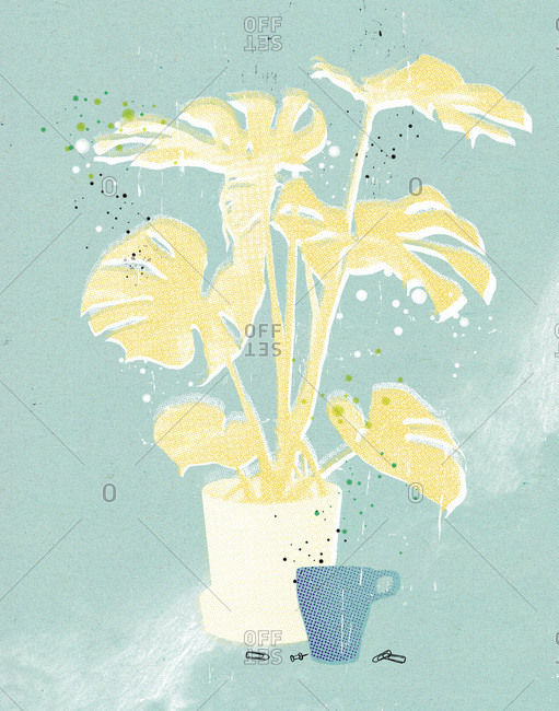 A tropical houseplant