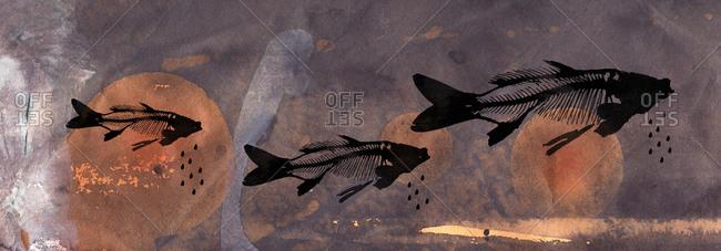 Flying fish skulls