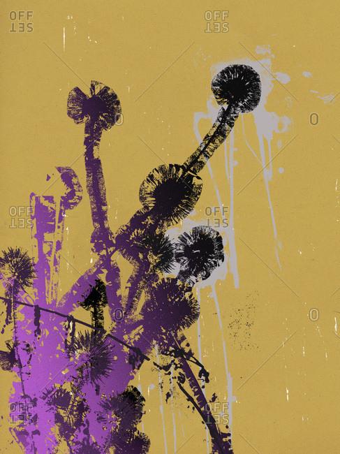 Purple and black dandelions