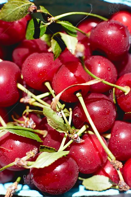 Fresh wet cherries