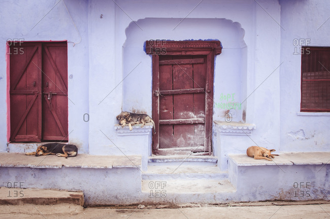 Dogs lying on a porch in Bundi, Rajasthan, India