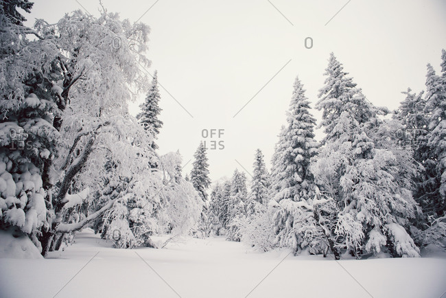 Forest clearing in woods with deep snow