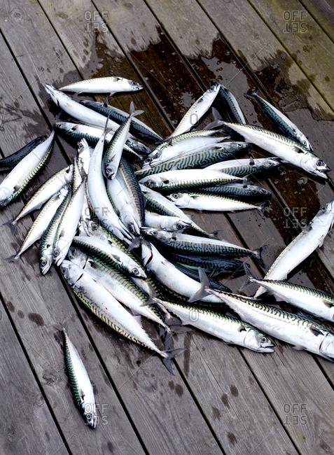 A pile of caught fish on a deck