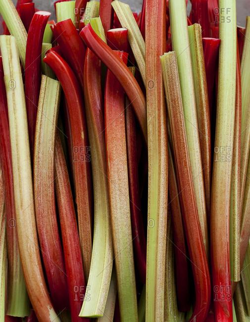 A pile of rhubarb stems