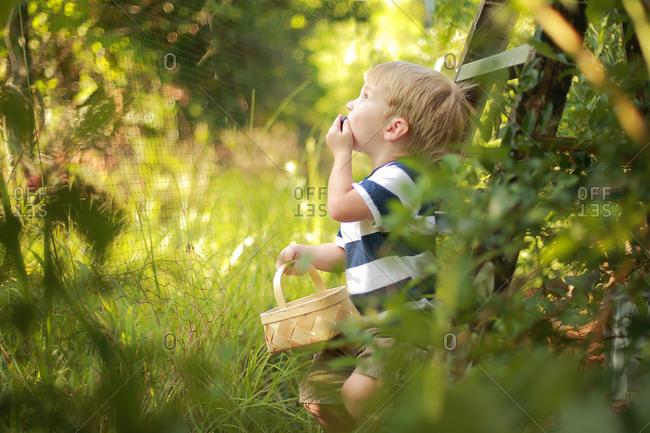 A little boy shoves blueberries in his mouth at an orchard