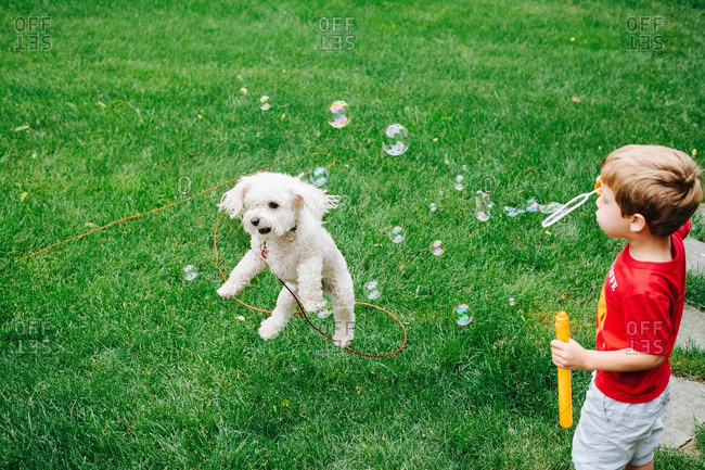 Young boy blowing soap bubbles next to a jumping dog