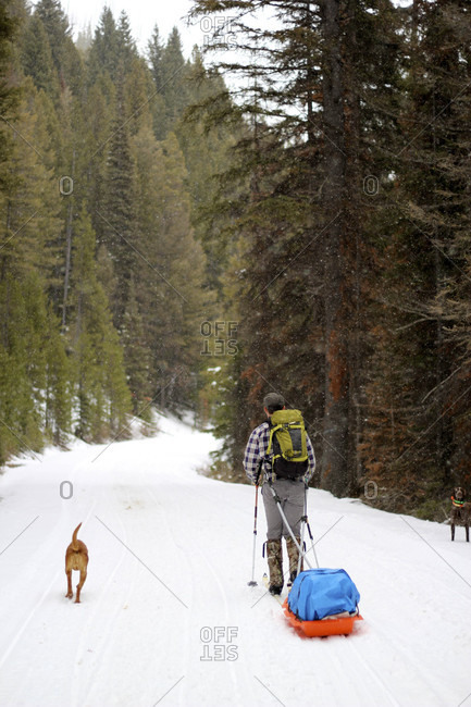 Man skis uphill with his dog towing a sled