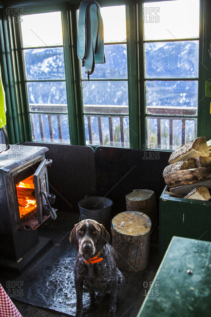 A German Shorthaired Pointer sits in front of a wood fire stove in an old fire lookout in Montana while skins dry out from a day of skiing