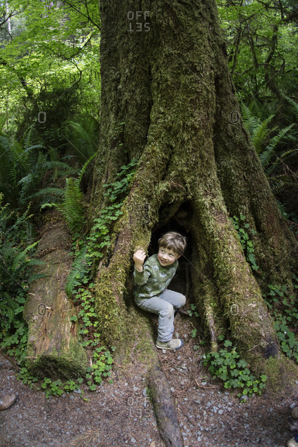 Toddler boy peers out of dark hole in Redwood Tree trunk, Redwood National Park, California