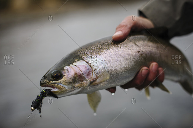 Angler releasing a rainbow trout back into the river in Patagonia, Argentina